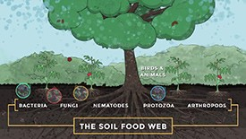"""The Compost Story"" video preview"